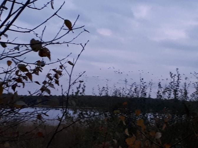 Cranes, Tister Bauernmoor