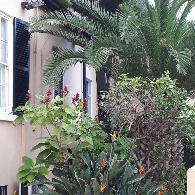 Garden in Gibraltar