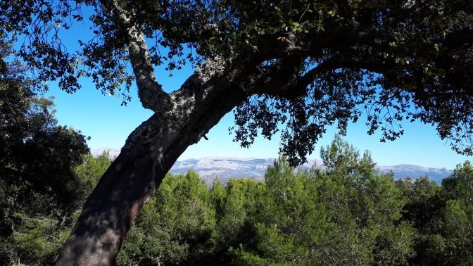 Parque Natural de los Montes de Malaga