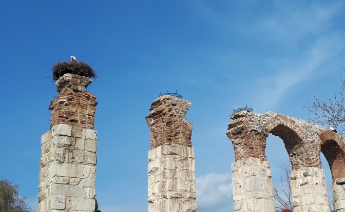 Stork nests Selçuk