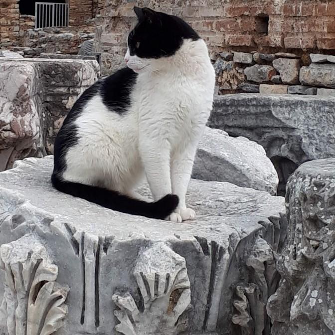 Cat Ephesus