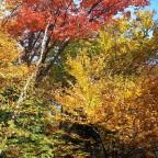 Beautiful Vermont, Part 2